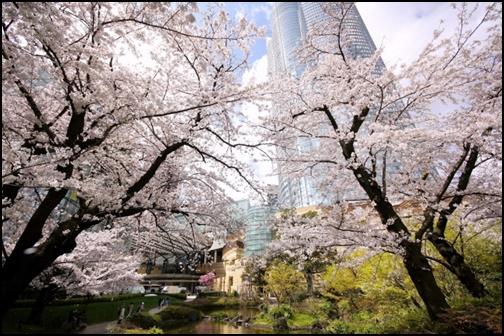 毛利庭園の桜の画像