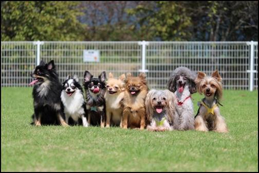 犬たちの画像