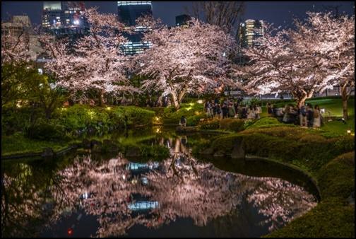 毛利庭園の夜桜ライトアップの画像