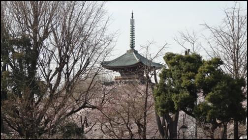 上野公園と桜と神社の画像