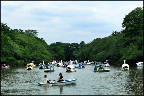 井の頭恩賜公園のボートの画像
