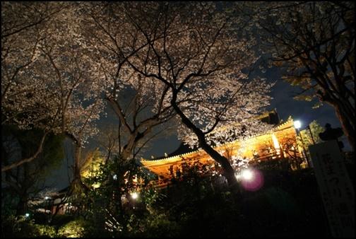 上野公園の夜桜の画像