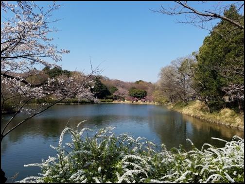 県立三ツ池公園の画像