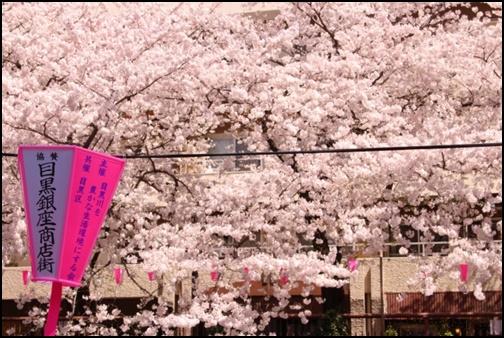 中目黒川の桜の画像