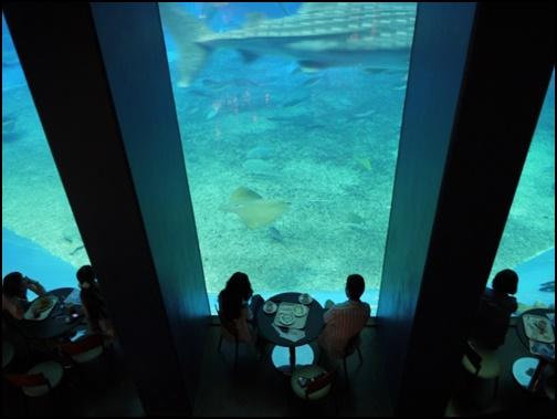 沖縄美ら海水族館の画像