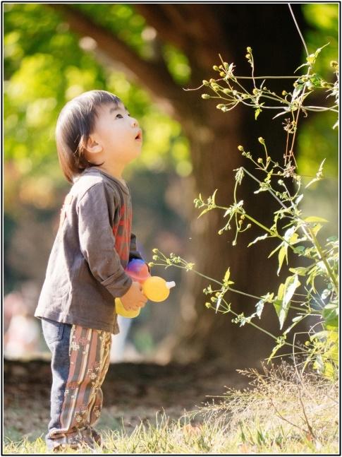 植物を見つめる幼児の画像