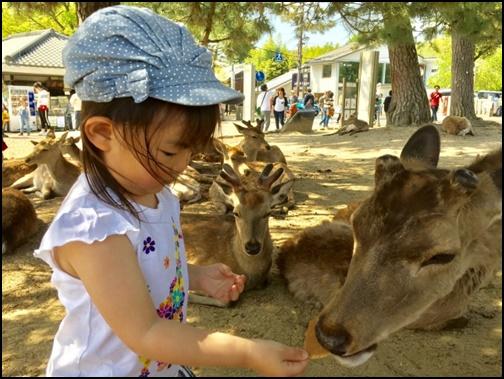 鹿にしかせんべいを上げている女の子の画像