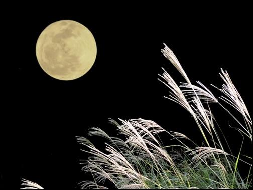 満月とススキの画像