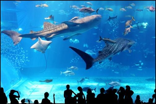 美ら海水族館の画像