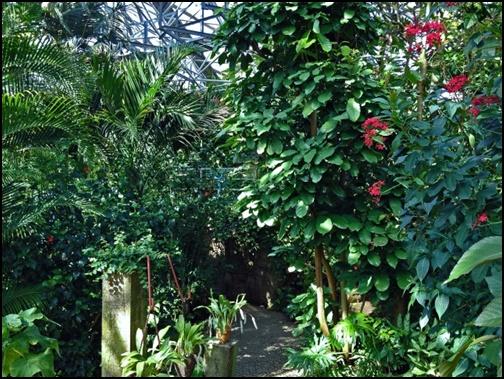 植物園の画像