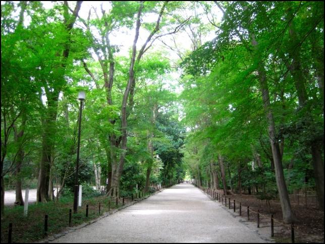糺の森の画像