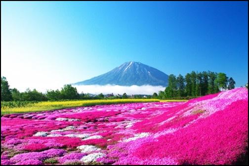 花と山の画像