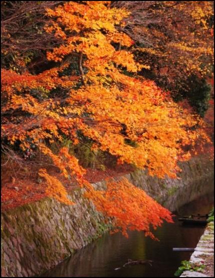 哲学の道の紅葉の画像