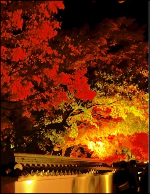 永観堂の紅葉のライトアップ画像