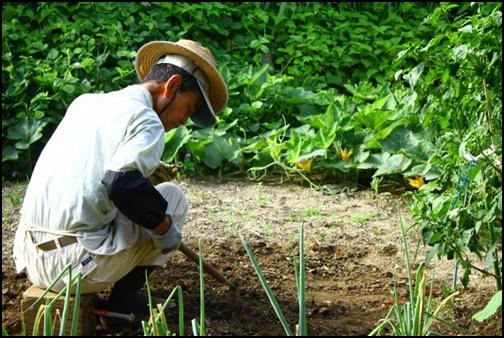 農業する男性の画像