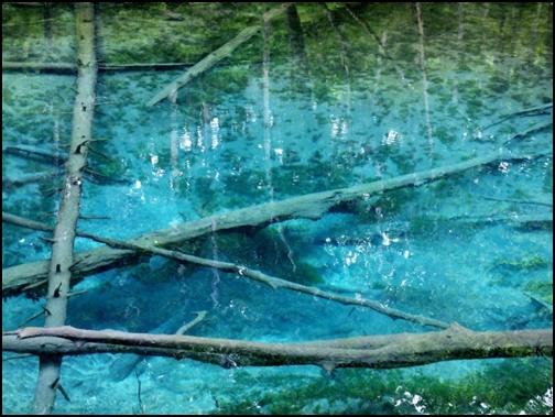 神の子池の画像