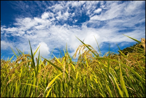 田園風景の画像