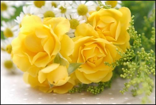 黄色いバラの画像