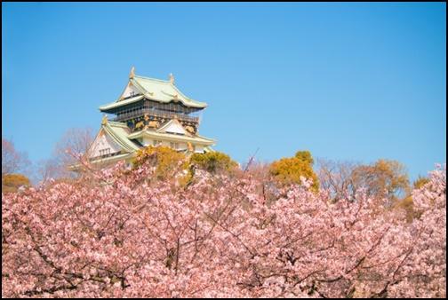 桜と大阪城の画像