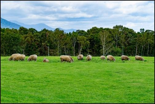 羊ケ丘展望台の画像