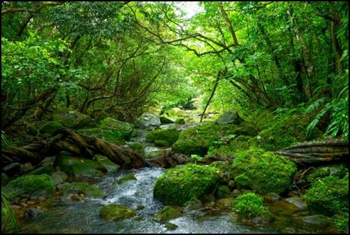 川と森の画像