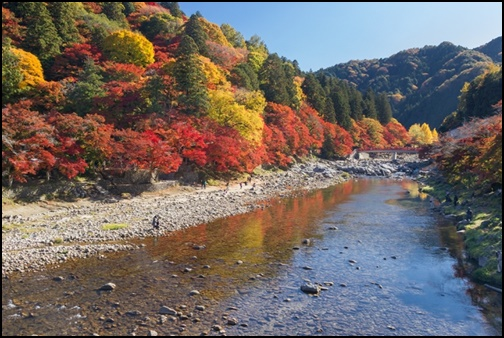 紅葉と川の画像