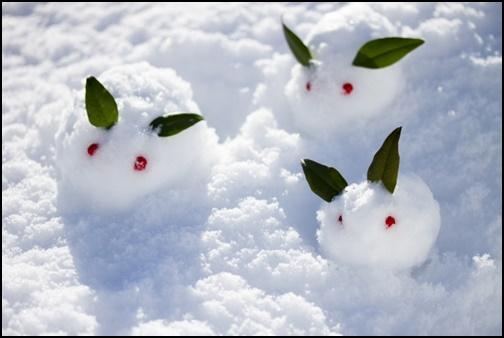 雪ウサギの画像