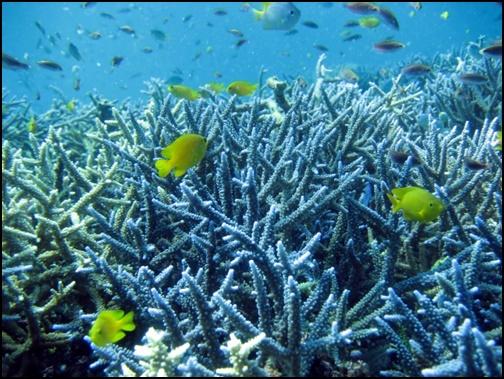 珊瑚の画像