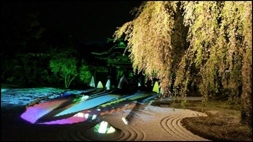 高台寺のプロジェクトマッピングされた夜桜画像