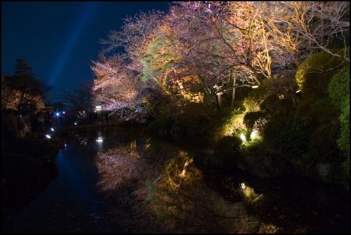 清水寺の夜桜画像