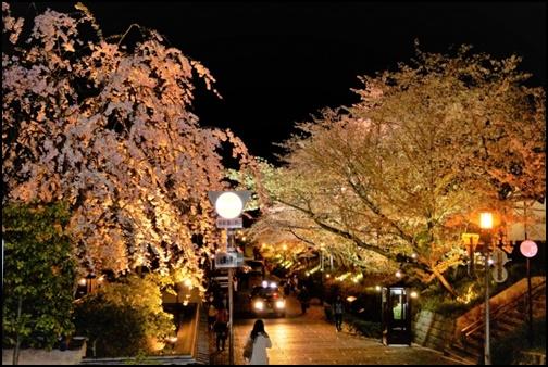 高台寺周辺の夜桜の画像