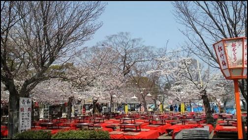 京都の円山公園の桜の画像