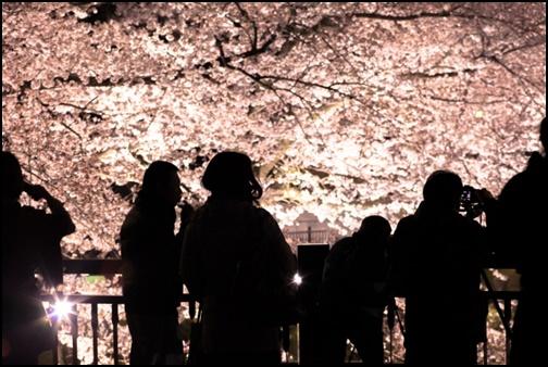 夜桜を鑑賞している人たちの画像