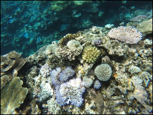 バラス島のサンゴの画像