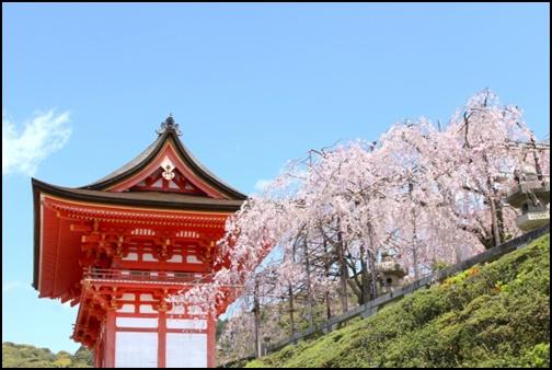 清水寺の桜の画像