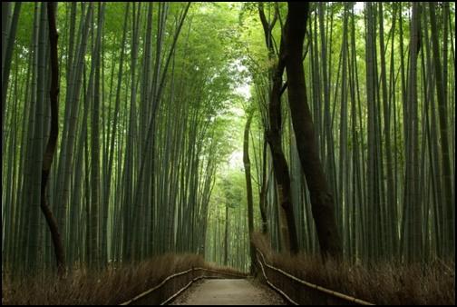 京都の嵐山の画像