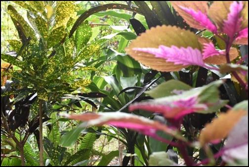 由布島の亜熱帯の画像