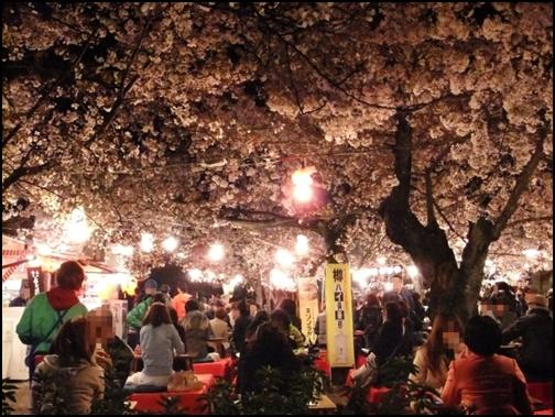 京都夜桜ライトアップの画像