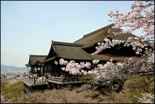 清水寺と桜の画像