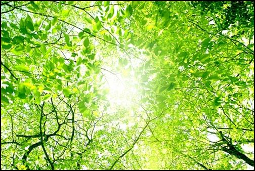 緑の木々の中から差し込む日差しの画像