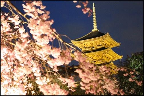 京都5重の塔と桜の画像