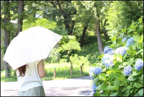 日傘をさしながら紫陽花を見る女性の画像