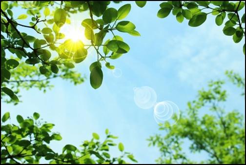 陽射しの画像