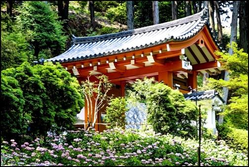 三室戸寺の紫陽花園の画像