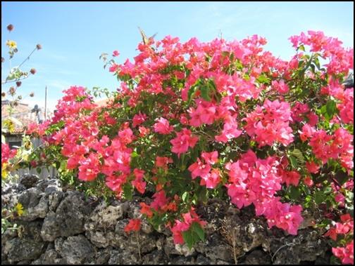 沖縄の花の画像