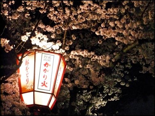 4月の京都、夜桜の画像
