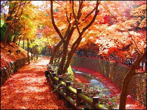 北野天満宮の紅葉の画像