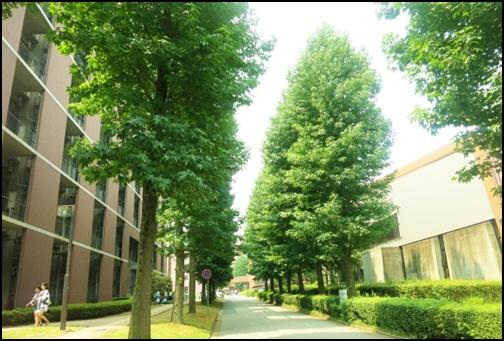 キャンパスの画像