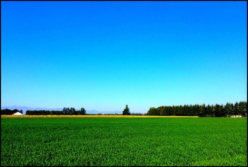 北海道の草原画像