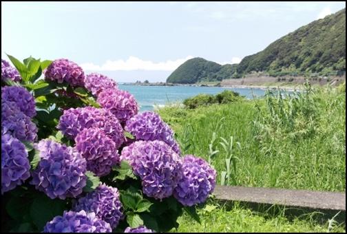 ビーチと紫陽花の画像